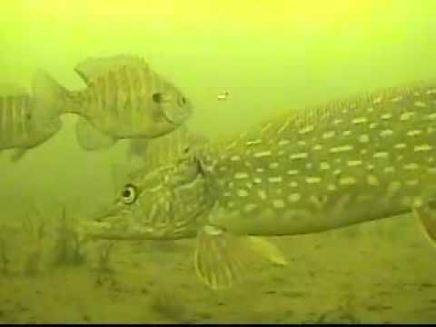 Ice Fishing Under Water Camera Marcum Pancam Pike Bass Crappie Sunfish