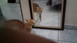 Кошка и зеркало! Прикол, ржака)))