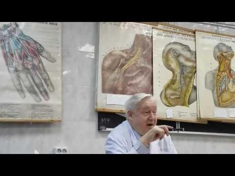 Шейное сплетение. Анатомия человека . ПНС