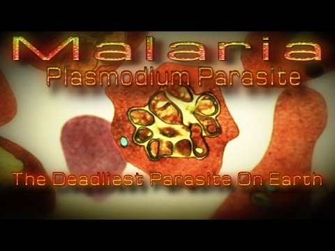 Malaria |Plasmodium| The Deadliest Parasite On Earth