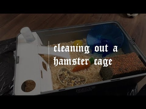 how to clean out a hamster cage    lilhammies
