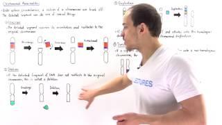 Chromosomal Deletion, Inversion, Duplication and Translocation