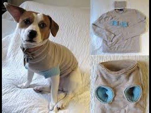 Como Hacer Sueter Para Perro Chihuahua
