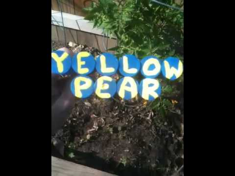Yellow Pear Plant Marker Homemade