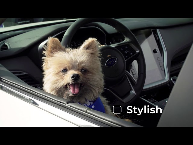 Subaru of Bend - Humphry the Dog!