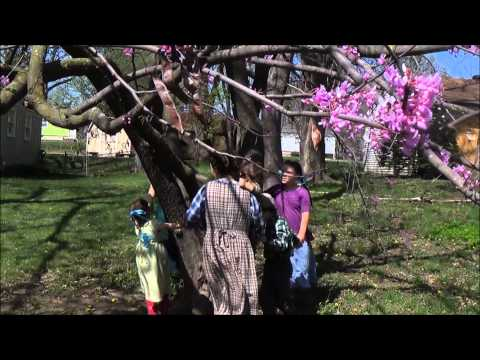 """""""Redbud Tree"""" Music Video By Chidren Of The King"""