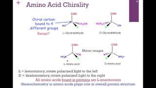 015-Amino Acid Structure/Hydrophobic Amino Acids