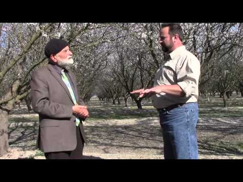 America! The Almond Tree are Blossoming! An Interview with Steve Koretoff
