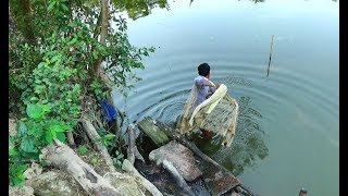 Net Fishing | Catching Big Fish With Cast Net | Net Fishing in the village (Part-241)