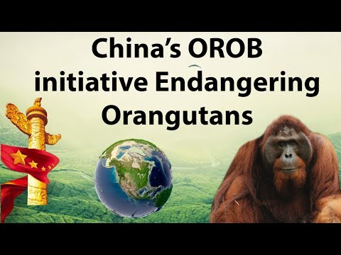One Belt One Road initiative of China is endangering Tapanuli Orangutan - Current Affairs 2018