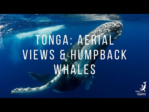 Aerial views of Tonga and the Humpback Whales