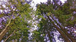 видео Участки в поселке на Новой Риге, продажа земельных участков по Новорижскому шоссе