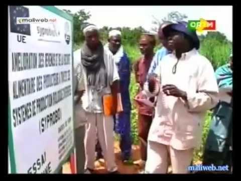 La production du coton bio en Afrique de l'Ouest: Le projet Syprobio (Oct 2012)