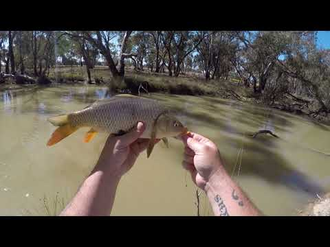 Carpilicious Carp Fishing With Bait In 9 Mile Creek