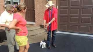 Puppy Maltese Afraid To Walk  - Dog Intervention Dog Whisperer/interventionist Big Chuck Mcbride