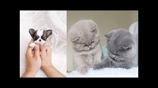 ♥Cute Dogs and Cats Doing Funny Things 2018♥ #9 - FunnyAnimals