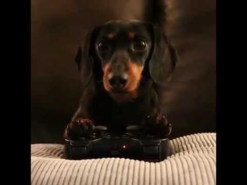 Dog Playing Video Game | Crusoe Kills a Zombie