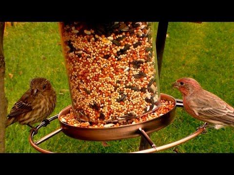 Birds Eating Seeds Yum Yum