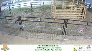 Preview of stream Cow birthing center, Maryland, USA
