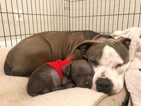 Mother Dog Was Heartbroken After Losing All Her Babies   Until She Met A Puppy