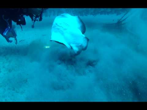 Full Video Shared by Our Divers | Scuba Diving with Topdiving in Gran Canaria