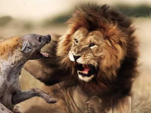 Christopher Walken   The Lion Speech