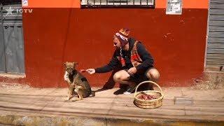 Почему в Перу бездомные собаки отказываются от еды?