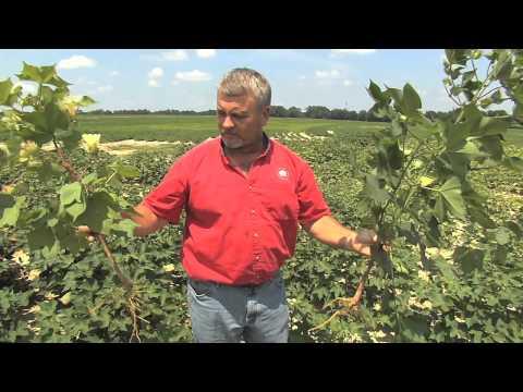 South Georgia Farmers Deal With Summer Rains