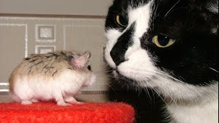 Tom and Jerry Live 2015 ... ( Smartest Rat in The World )