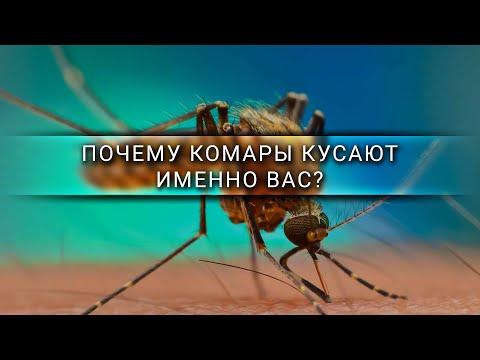 Почему комары кусают именно вас? [Veritasium]