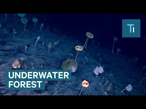 This Underwater Forest Looks Like Something From Another Planet