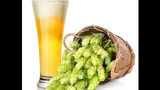 Домашние пиво своими руками часть1
