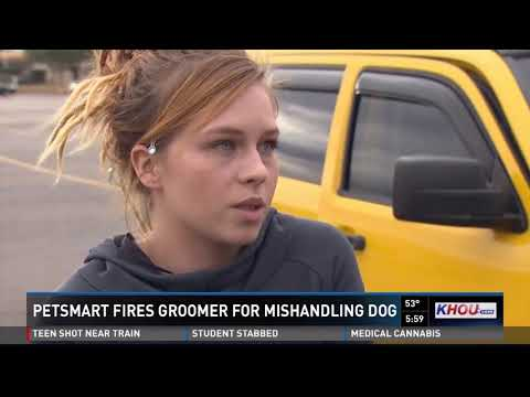 Caught on camera: Dog mishandled by PetSmart groomer