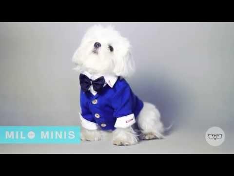 Milo Minis:  Bowtie Outtakes