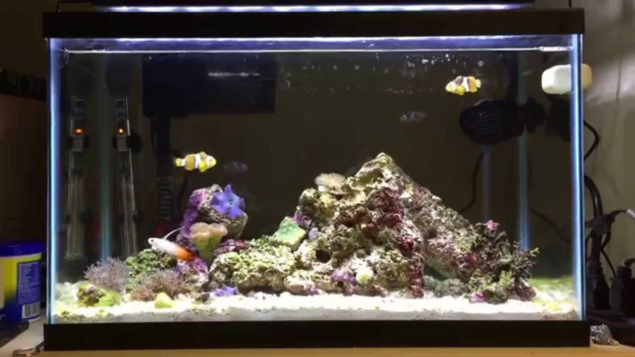 Awesome fully stocked 10 gallon nano reef tank youtube for Saltwater fish for 10 gallon tank