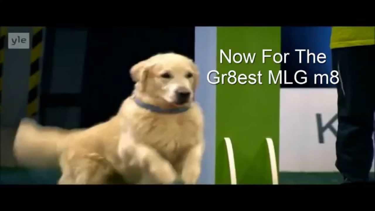 MLG Golden Retriever Race Clutch YouTube - Golden retriever obedience competition fail