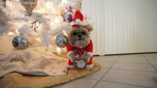 Munchkin the elf rudolph gingerbread santa Teddy Bear