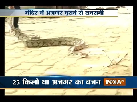 Video: 8-ft Long Cobra Found in a Temple of Gurgaon, Haryana - India TV