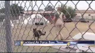 "Military Working Dogs: Furry Warriors Are Vital Part Of War - Part 1   ...""bring Them Home!"""