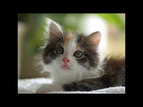 s sse k tzchen sweet kitten youtube. Black Bedroom Furniture Sets. Home Design Ideas