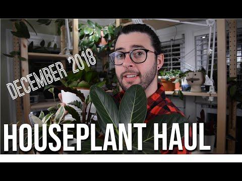 Houseplant Haul - December 2018
