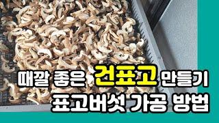 표고버섯 가공 _  품질좋은 건표고버섯 만들기 _ 건조…