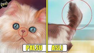 8 Tips Mengenali Ciri-Ciri Kucing Persia Yang Asli