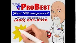 DISCOUNT COUPON 10% OFF: Rat, Mice, Rodent Control  in Arizona - (480) 831 9328