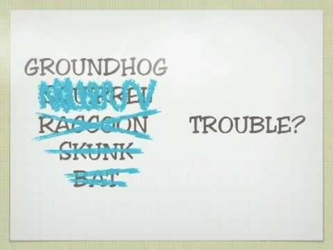 Raccoon, Squirrel, Bat, Groundhog, Skunk Control, Columbus, OH