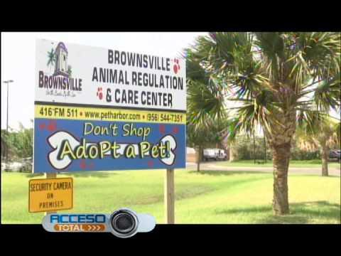 Brownsville Animal Shelter Youtube