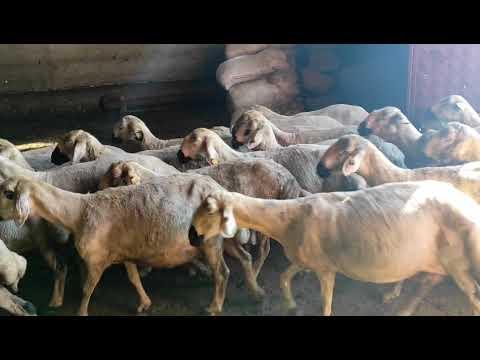 BİR FATİHA OKU BARİ BAYRAMDAN BAYRAMA. ( Türkülerin çobanı TARIK KARA ). indir