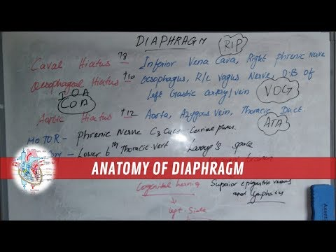 Diaphragm - Anatomy,Function,Origin,Openings,Innervation,Blood supply | Made simple