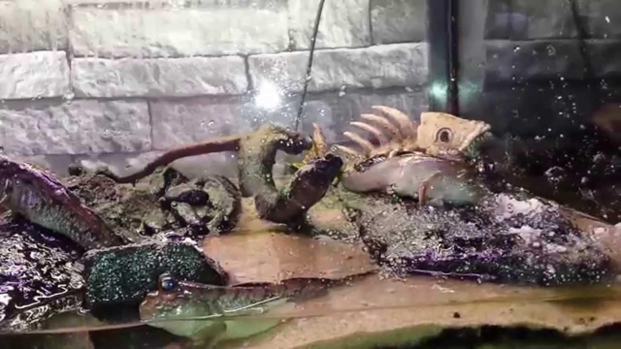 how to set up a brackish aquarium
