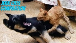 Jerk Cats Compilation